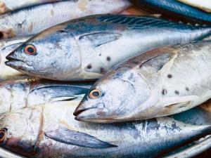 4 người ngộ độc do ăn cá ngừ nhiễm khuẩn
