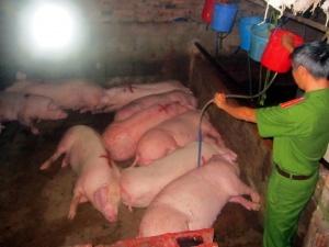 Đồng Nai: Bắt quả tang cơ sở bơm nước, thuốc an thần vào lợn