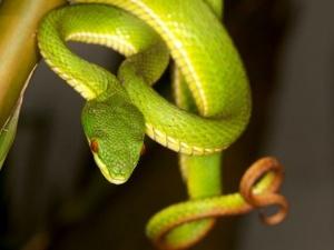 Sơ cứu kịp thời nạn nhân bị rắn độc cắn