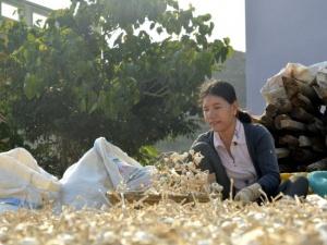 Thương hiệu bị đánh cắp, dân trồng tỏi Lý Sơn lao đao