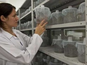 Trung Quốc âm thầm sản xuất 1 triệu con muỗi mỗi tuần