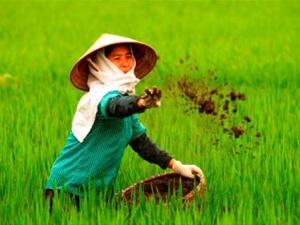 Phân bón giả 'chôn' của người nông dân 2 tỷ USD mỗi năm
