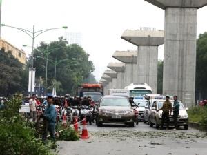 Mở rộng đường Phạm Văn Đồng: Chuyển một cây xà cừ hết 25 - 40 triệu đồng