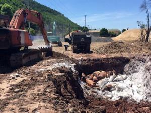 Quảng Ninh: Phát hiện gần 7 tấn lợn chết đang phân hủy trên tàu biển