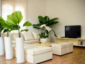 Người tuổi Sửu nên trồng cây phong thủy nào trong nhà để hợp mệnh?