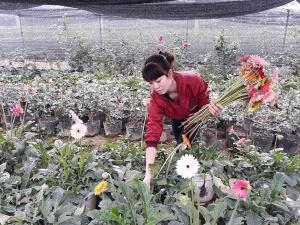 Mê Linh (Hà Nội): Điển hình ứng dụng KH&CN nâng cao năng suất, chất lượng hoa thương phẩm