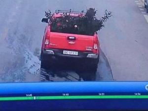 Cây hoa hồng cổ bị trộm gây xôn xao: Thông tin về chiếc ô tô bán tải đỏ nghi là thủ phạm