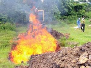 Quảng Ninh: Tiêu hủy hơn 1000 con chim và 300 kg gà thịt nhập lậu