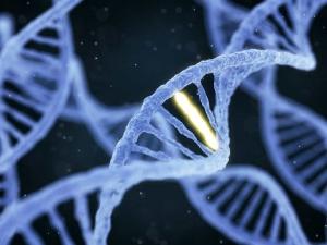 Công bố kết quả nổi bật trong nghiên cứu về bộ gen người Việt