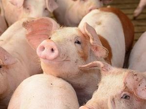 Bộ Công Thương đề xuất 4 giải pháp để cân bằng cung - cầu thịt lợn dịp Tết