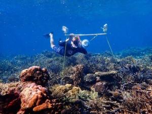 Đặt loa âm thanh dưới nước có thể giúp khôi phục các rặng san hô bị hư hại