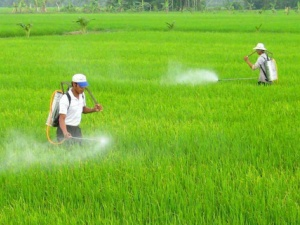 Từ ngày 1/6, vi phạm về quảng cáo thuốc bảo vệ thực vật có thể bị phạt đến 40 triệu đồng
