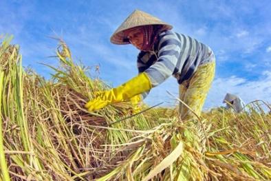 Làm sao để nông dân Việt Nam không bỏ ruộng?