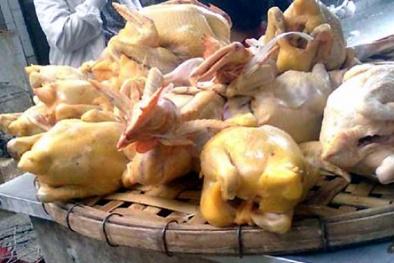 Phát hoảng với 'gà mía' Trung Quốc luộc sẵn