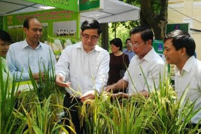 Đâu là con số thực về doanh nghiệp khoa học và công nghệ Việt Nam?