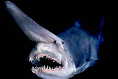 Những lần 'quái vật' hiếm sa lưới ngư dân Úc