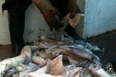 Phát hiện hóa chất tẩy trắng tại cơ sở kinh doanh hải sản