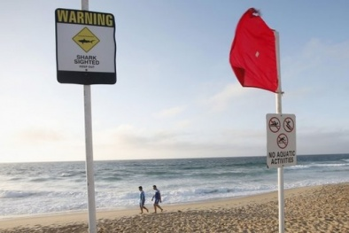 Du khách Nhật Bản thiệt mạng do cá mập tấn công tại Sydney