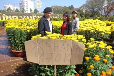 Hoa cúc, hoa lan chơi Tết đại hạ giá vẫn vắng người mua