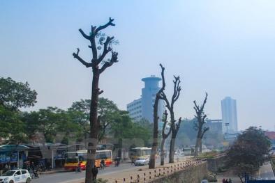 Chặt 6.700 cây xanh: Hà Nội có thể sẽ lâm vào cảnh ô nhiễm nặng