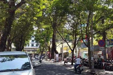Ngắm đường phố Sài Gòn rợp bóng mát nhờ hàng cây xanh tốt