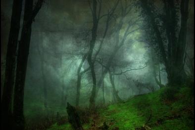 Khu rừng ma ám mệnh danh 'Tam giác quỷ' trên mặt đất