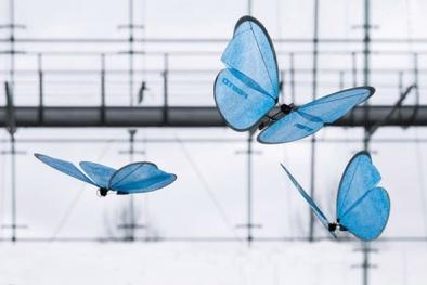 Chế tạo thành công robot bướm giống như thật