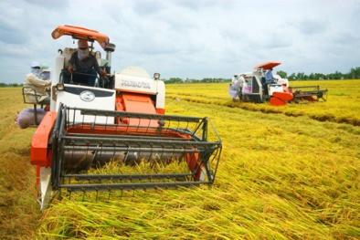 Đông Triều: Nâng cao năng suất, chất lượng cây lúa nhờ quy hoạch vùng sản xuất tập trung