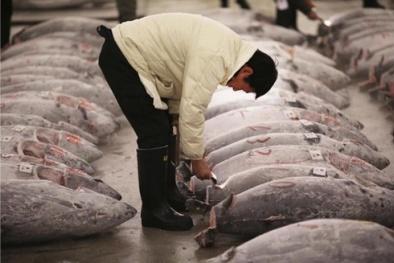 Vì sao cá ngừ Nhật có giá hàng triệu USD?