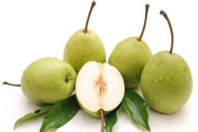 Kỹ thuật trồng cây lê cho quả ngọt, nhiều nước