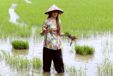 Mẫu Tây Andrea xắn quần xông xáo đi cấy lúa