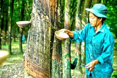 Ứng dụng CNTT để tăng năng suất nông nghiệp ở Tây Nguyên