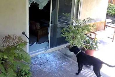 Kinh hãi cảnh chú chó bị trộm lừa ăn mảnh thủy tinh vỡ