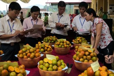 Lạng Sơn: Nâng cao năng suất chất lượng trái cây từ đẩy mạnh ứng dụng KH&CN