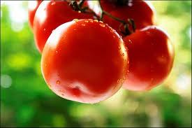 Thực phẩm biến đổi gen phải rõ trên nhãn là 'biến đổi gen'