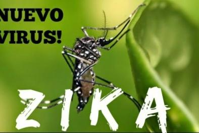 Bộ Y tế cảnh báo virus ăn não do muỗi Aedes