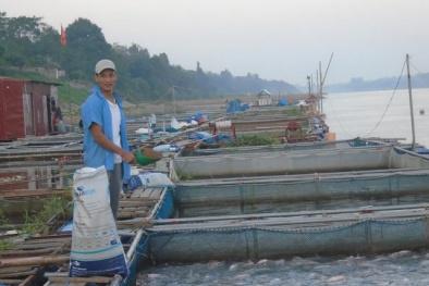 Nuôi cá trên sông lãi 600 triệu đồng/năm