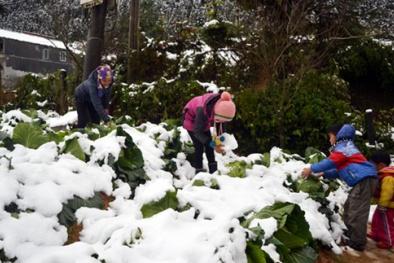 Không khí lạnh rất mạnh tràn về: Hà Nội xuống 7 độ C, Sa Pa có thể có tuyết
