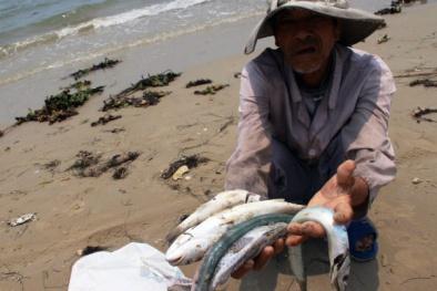 Bộ Khoa học và Công nghệ vào cuộc vụ cá chết ở miền Trung