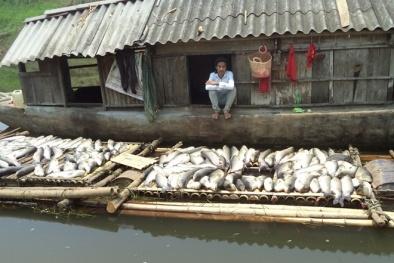 Vụ cá chết hàng loạt, nước sông đổi màu: Thanh Hóa 'cầu cứu' Thủ tướng