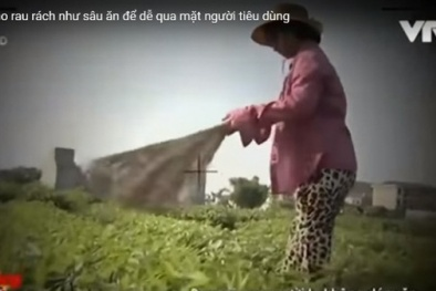 Phóng sự 'Cây chổi quét rau' bị dàn dựng, người nông dân vô tình thành diễn viên