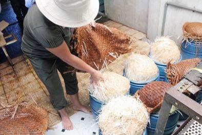 Tận mục màn tiêm ống hóa chất Trung Quốc vào giá đỗ, 48h sau cho ra lò 12kg