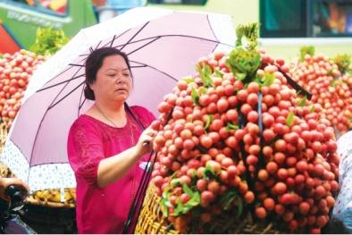 Hỗ trợ tối đa tiêu thụ 130.000 tấn vải thiều Bắc Giang