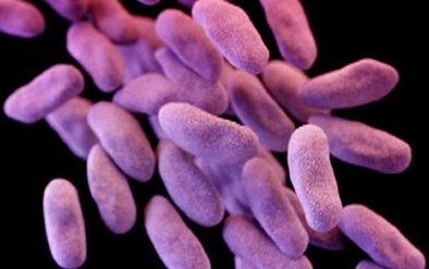 Nỗi đáng sợ khi siêu vi khuẩn cứ 3 giây lại 'giết chết' 1 người