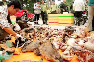 Việt Nam - Hoa Kỳ coi buôn bán động vật hoang dã là tội phạm nghiêm trọng