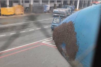 Máy bay Vietnam Airlines trễ 40 phút vì đàn ong khổng lồ 'đi lậu vé'