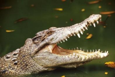 Xác bé trai 2 tuổi bị cá sấu lôi xuống hồ chìm dưới làn nước âm u