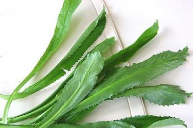 Diệt sỏi thận tận gốc bằng bài thuốc từ loại rau thơm vườn nhà