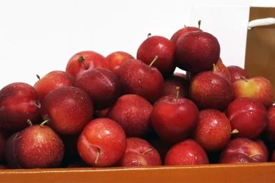 Mận, cherry Mỹ 600 ngàn/kg: Giới nhà giàu Việt sẵn lòng chi tiền ăn mỗi ngày