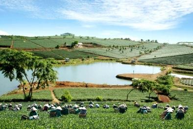 Xây dựng tỉnh Lâm Đồng thành vùng kinh tế động lực Tây Nguyên